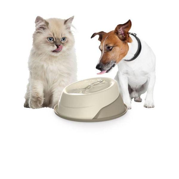 bebedouro automático para cão e gato