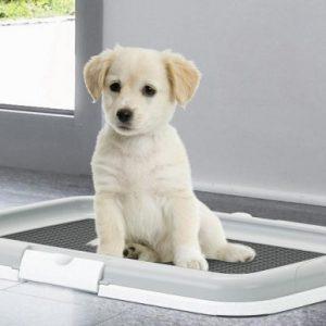 wc-cachorros-maiapet.jpg