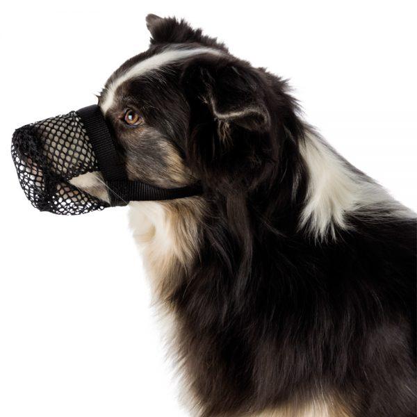 açaime para cão anti-ingestão